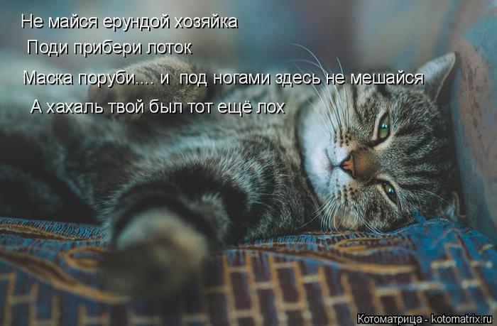 kotomatritsa_0Q (700x459, 294Kb)