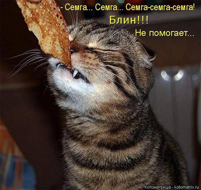kotomatritsa_Mi (700x660, 436Kb)