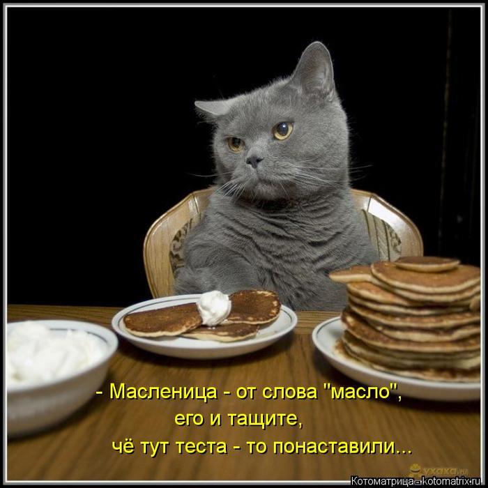 kotomatritsa_PF (700x700, 317Kb)