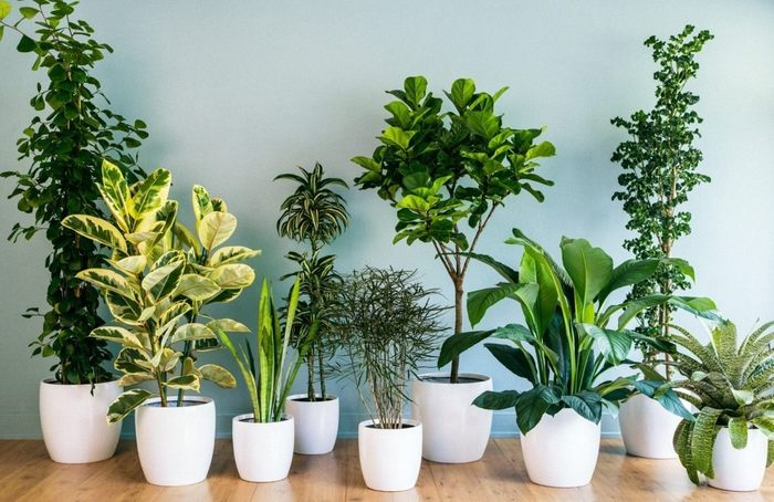 3937385_houseplants01 (700x454, 76Kb)