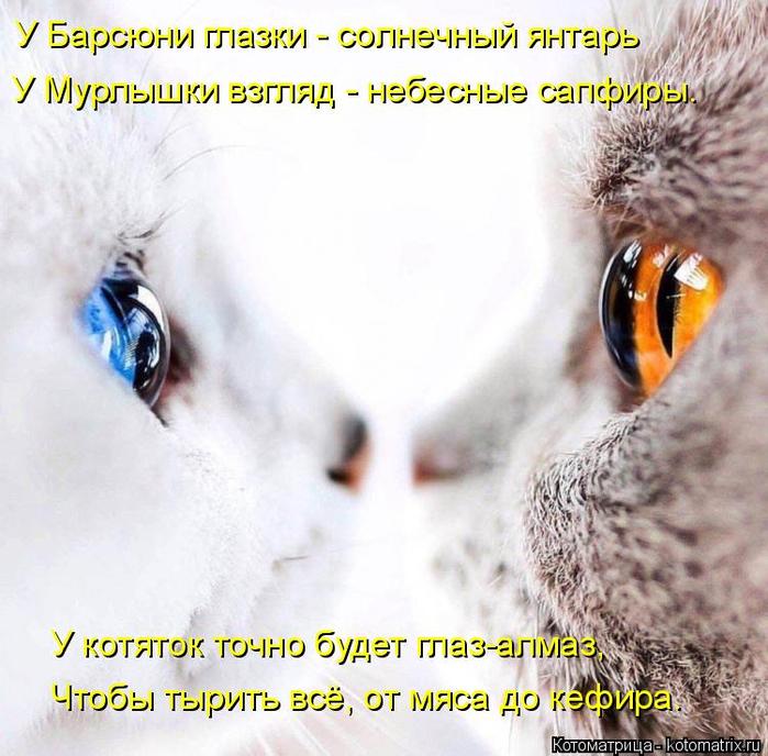 kotomatritsa_BU (700x688, 423Kb)