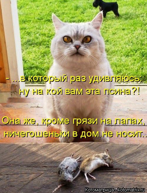 kotomatritsa_h (500x658, 358Kb)