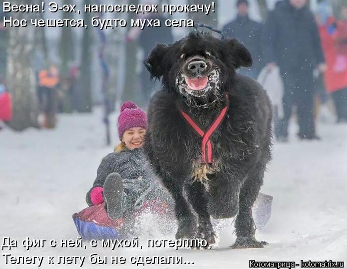 kotomatritsa_KL (700x544, 307Kb)