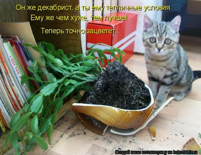 kotomatritsa_M (700x539, 442Kb)