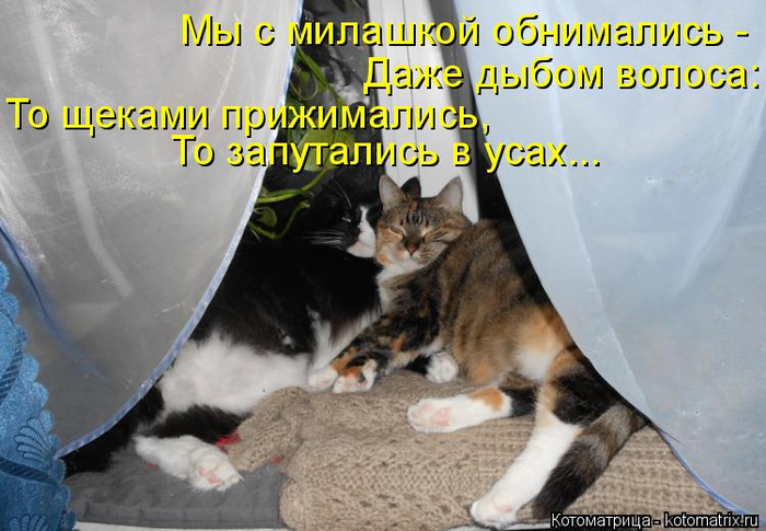 kotomatritsa_u (700x485, 324Kb)