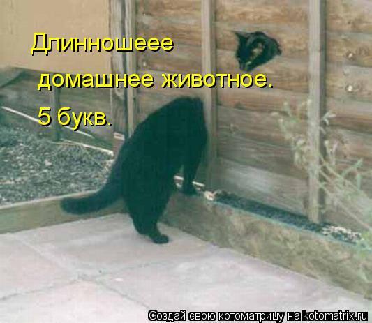 kotomatritsa_V4 (533x463, 155Kb)