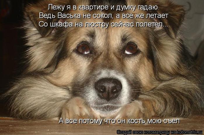 kotomatritsa_L (700x465, 337Kb)