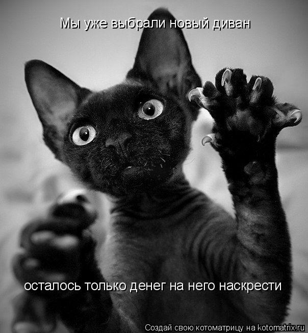 kotomatritsa_Mc (604x653, 153Kb)