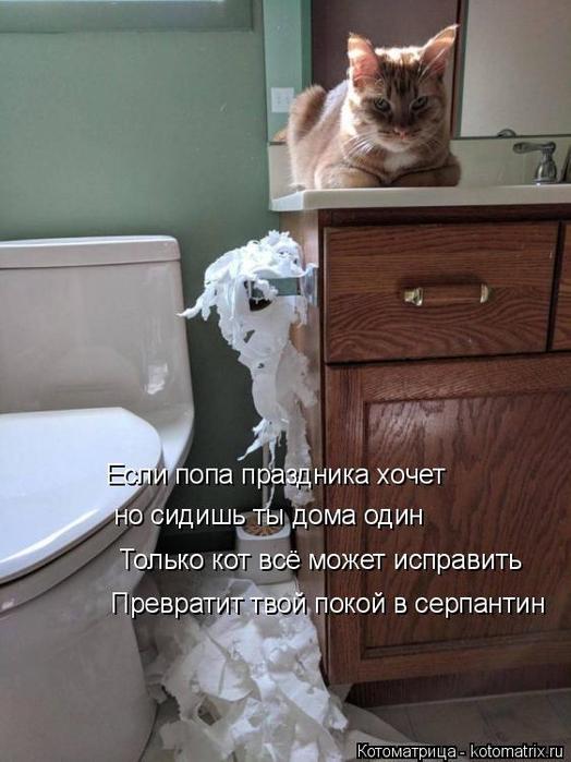 kotomatritsa_o (524x700, 290Kb)