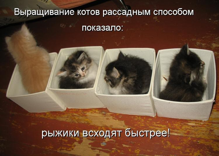 kotomatritsa_xz-e1386783626226 (700x498, 304Kb)