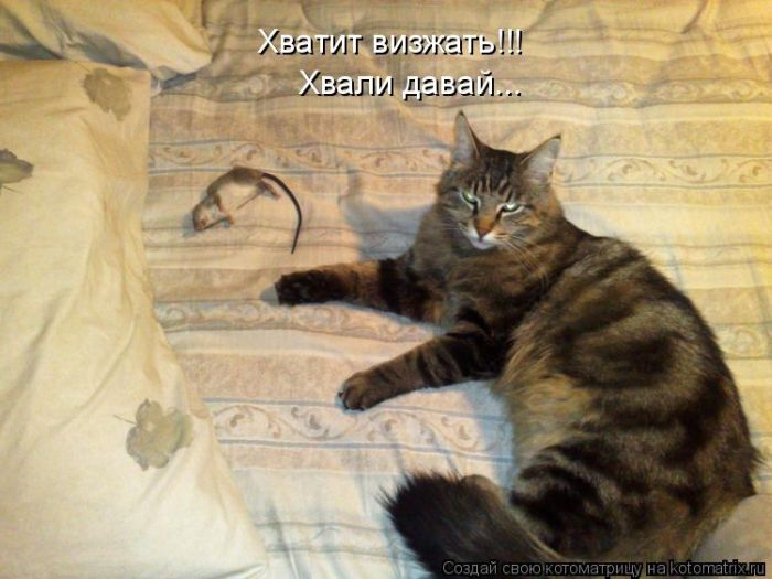 Stimka.ru_1308305109_1308295470_kotomatrix_43 (700x525, 240Kb)