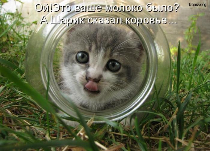 840824-2011.01.17-09.24.46-bomz.org-lol_kot_i_banka (700x503, 246Kb)
