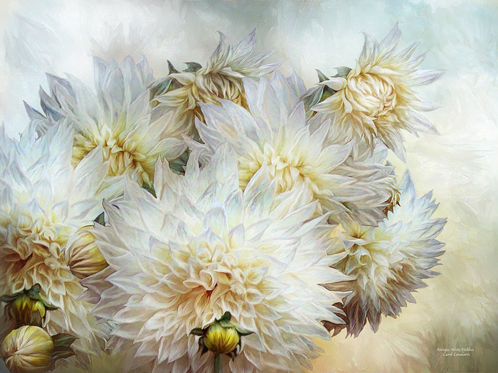 antique-white-dahlias-carol-cavalaris (700x525, 478Kb)