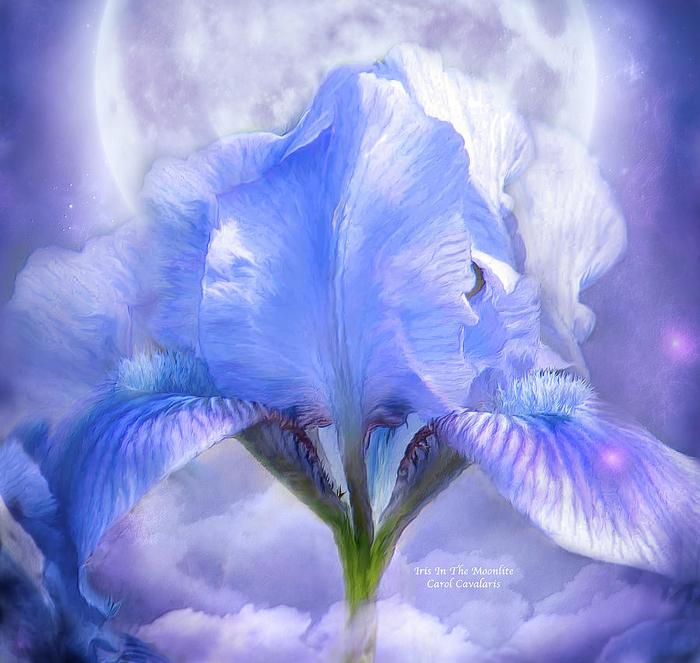 ЦВЕТЫ ДУШИ МОЕЙ... ПОТРЯСАЮЩИЕ КАРТИНЫ ТАЛАНТЛИВОЙ ХУДОЖНИЦЫ CAROL CAVALARIS!, цветы