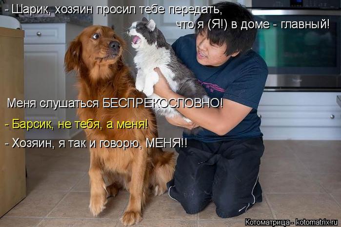 kotomatritsa_a (700x466, 313Kb)