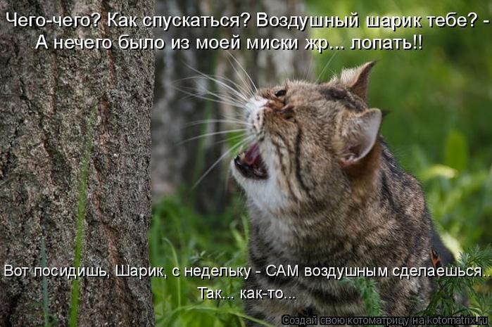 kotomatritsa_Hy (700x465, 356Kb)