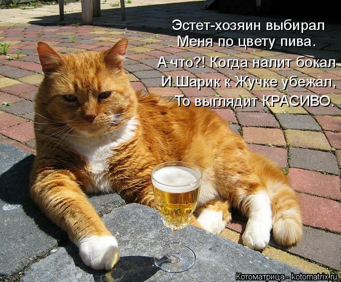 kotomatritsa_J (683x565, 353Kb)