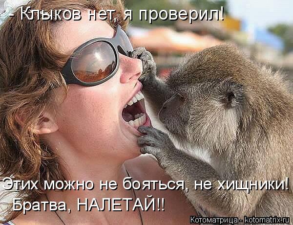 kotomatritsa_TB (600x460, 226Kb)