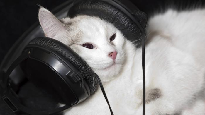 cat_wide-5910b27269c0e63eaad0495d93005deff99d3cc7 (700x393, 192Kb)