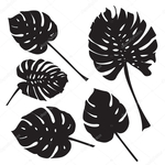 Превью depositphotos_125782102-stock-illustration-silhouette-tropical-monstera-leaves-black (700x700, 182Kb)