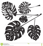 Превью silhouette-tropical-monstera-leaves-black-white-background-vector-illustration-78279217 (654x700, 249Kb)