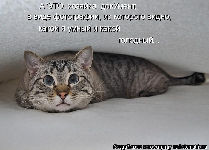 kotomatritsa_9 (700x504, 148Kb)