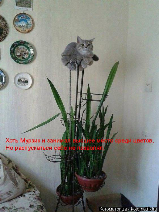 kotomatritsa_B (524x700, 349Kb)
