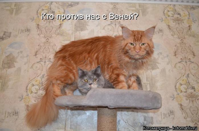 kotomatritsa_D (700x462, 278Kb)