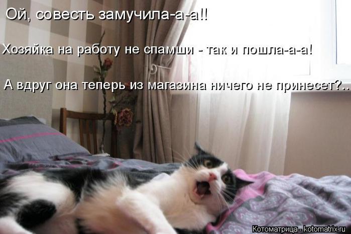 kotomatritsa_qa (700x465, 247Kb)
