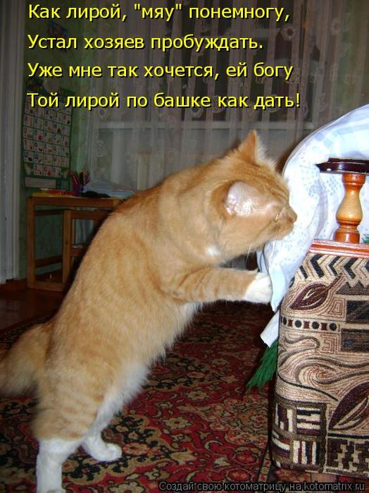 kotomatritsa_U (524x700, 445Kb)