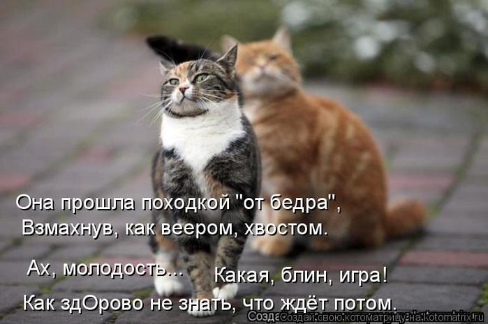kotomatritsa_vd (700x465, 247Kb)