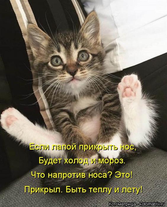 kotomatritsa_y (564x700, 360Kb)