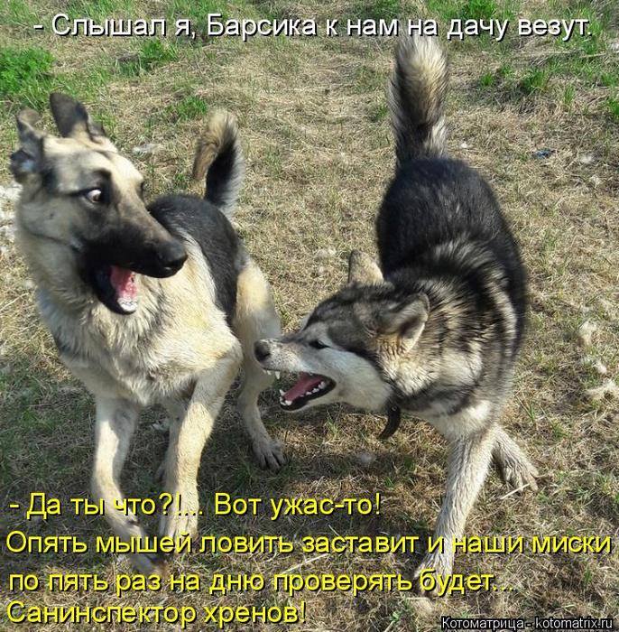 kotomatritsa_4 (686x700, 636Kb)