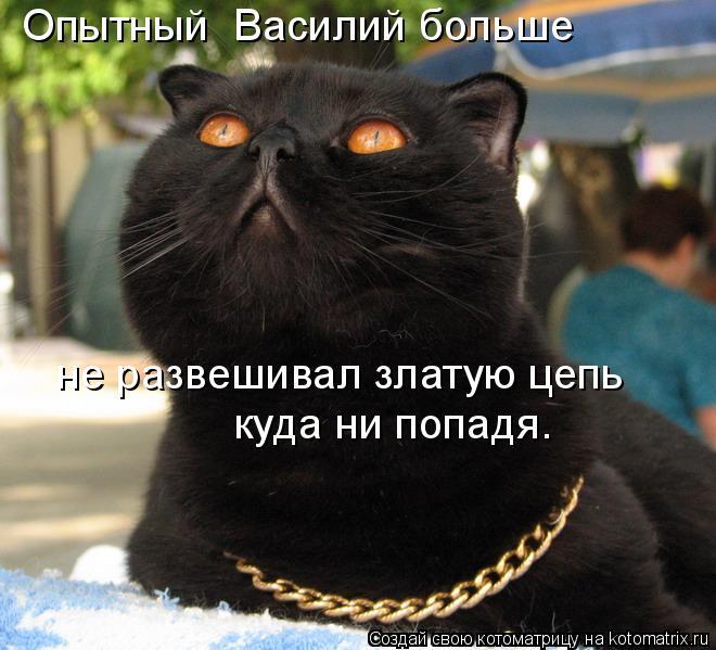 kotomatritsa_Gz (660x599, 232Kb)