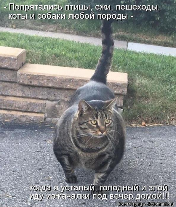 kotomatritsa_m8 (594x700, 419Kb)