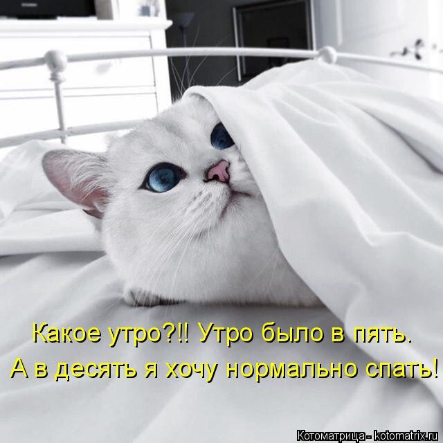 kotomatritsa_o (640x640, 173Kb)