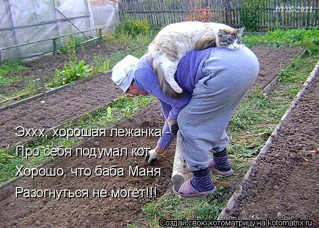 kotomatritsa_po (639x457, 316Kb)