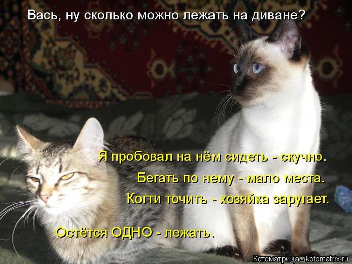 kotomatritsa_UU (700x524, 358Kb)