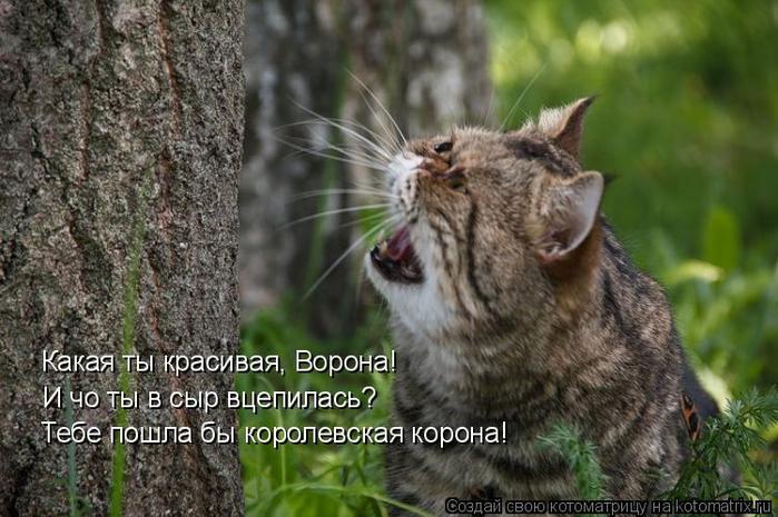 kotomatritsa_W (700x465, 335Kb)