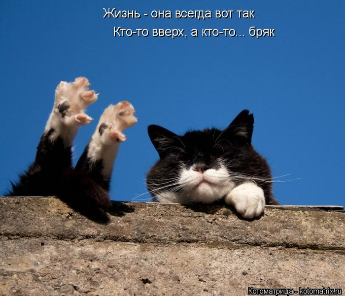 kotomatritsa_lB (700x601, 321Kb)