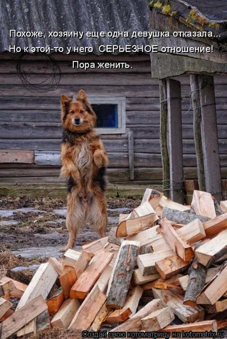kotomatritsa_z (468x700, 363Kb)