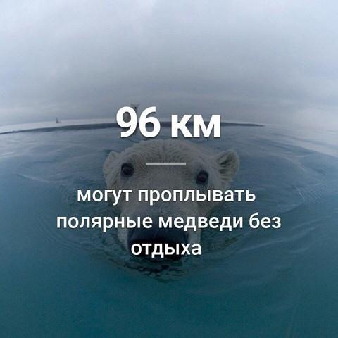 -58RbuWWAVU (480x480, 126Kb)