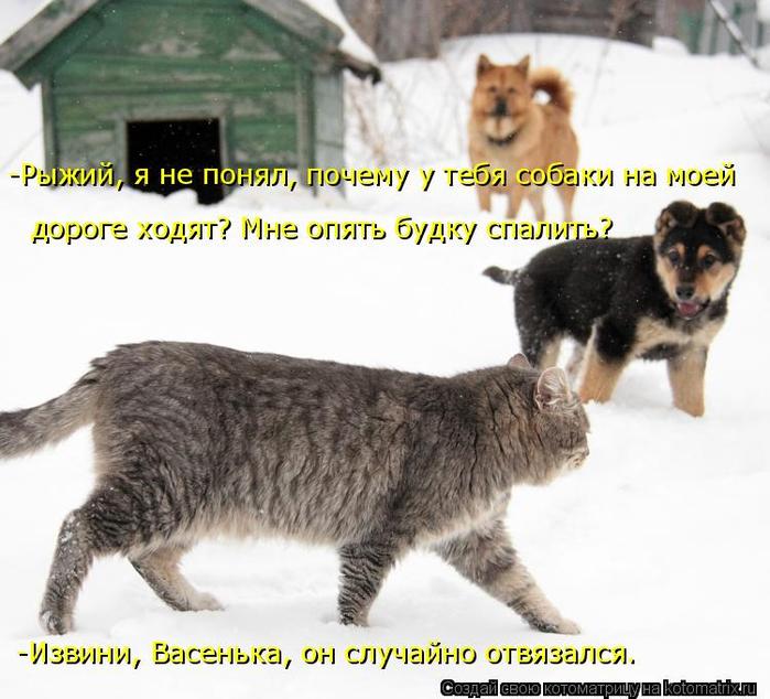 kotomatritsa__ (700x634, 356Kb)