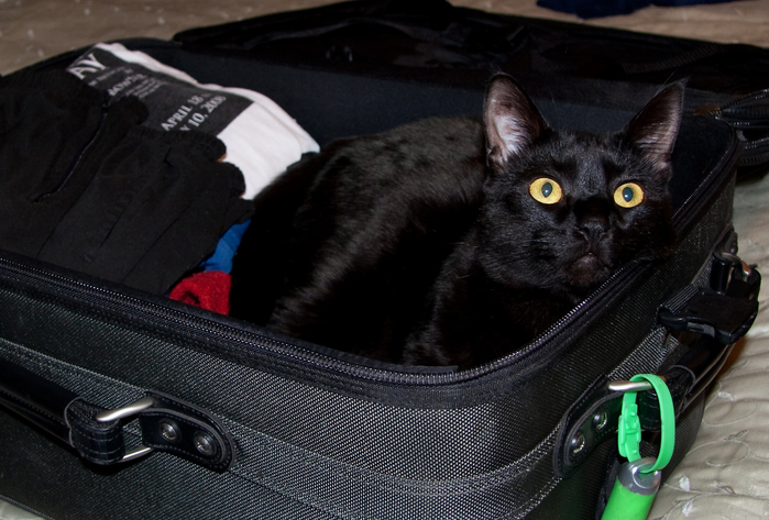 travel-cat-mammal-black-cat-black-pets-cats-blackcat-animals-suitcase-funnyanimalpictures-small-to-medium-sized-cats-cat-like-mammal-384721 (700x473, 367Kb)