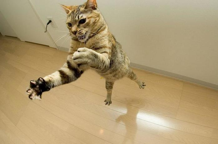 funny-pictures-of-cats-with-gu-5667 (700x462, 29Kb)