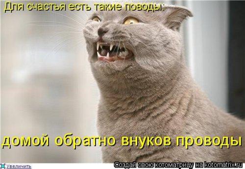 1561744774_kotomatrica-38 (500x345, 117Kb)