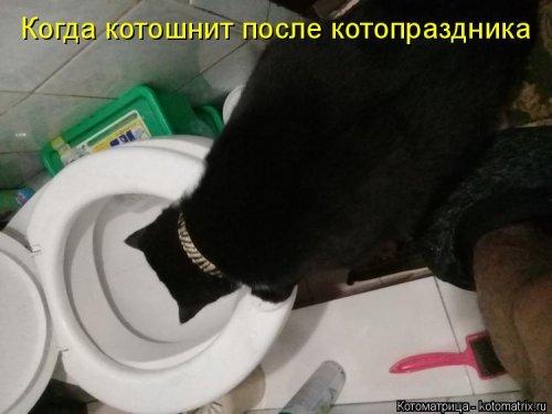 1561744779_kotomatrica-7 (500x375, 95Kb)