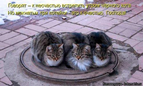1561744781_kotomatrica-30 (500x301, 126Kb)