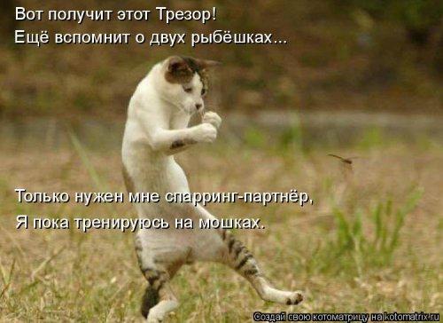 1561744832_kotomatrica-39 (500x364, 139Kb)
