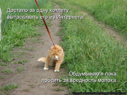 1561744835_kotomatrica-35 (500x375, 178Kb)